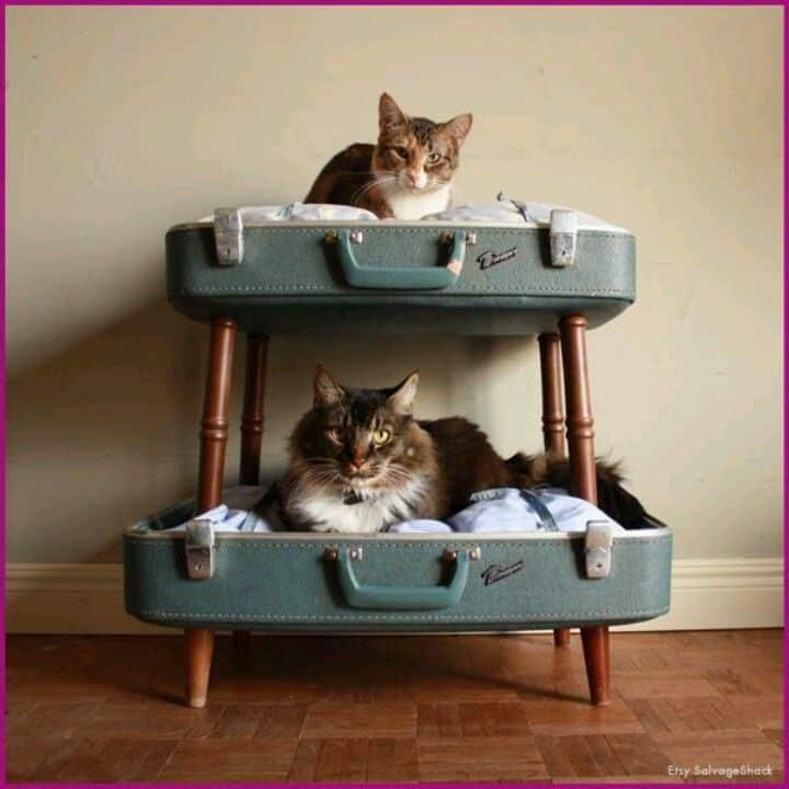 Come riutilizzare le VALIGIE VINTAGE cuccia per gatti