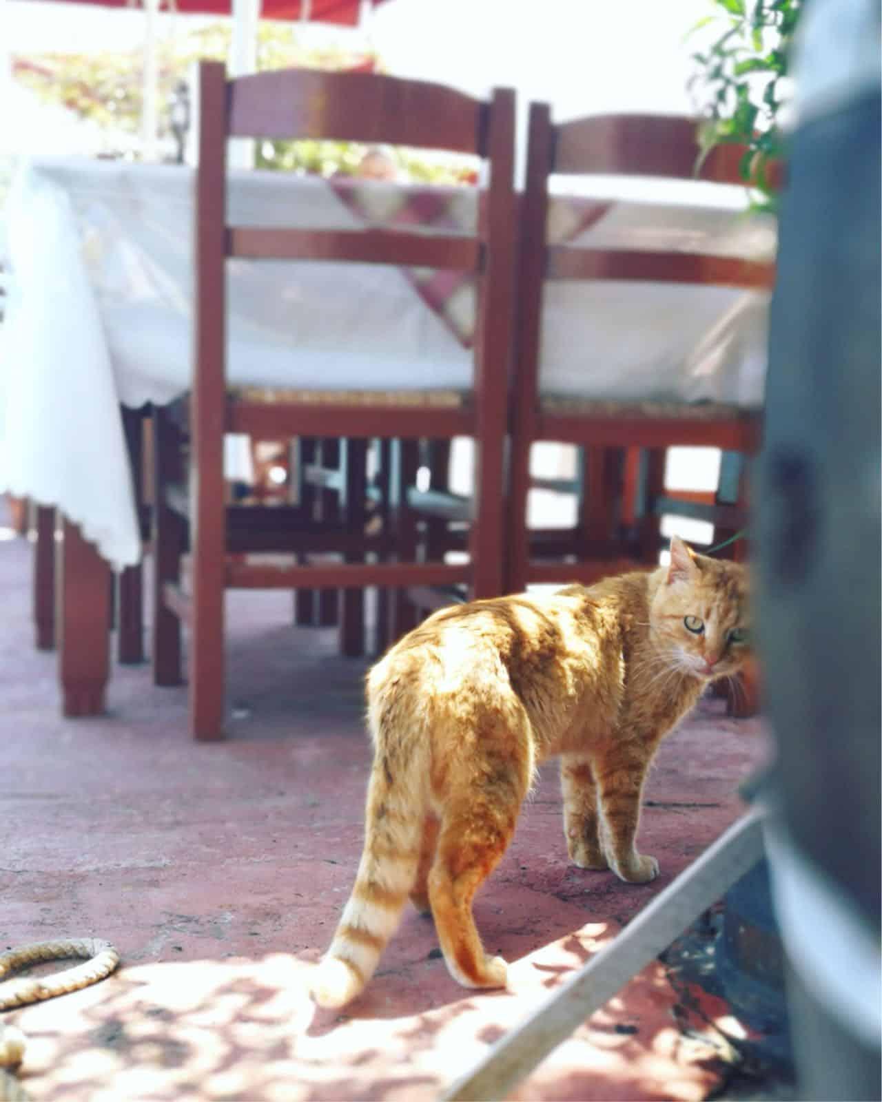 gatti in Grecia